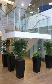 interior-plant-diplays-repetition-of-black-cubicos-with-specimen-plants-for-jarrolds-kingfisher-house-norwich-norfolk1a