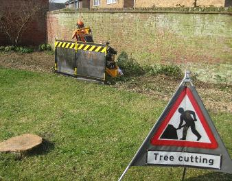 stump-removal-norwich-norfolk